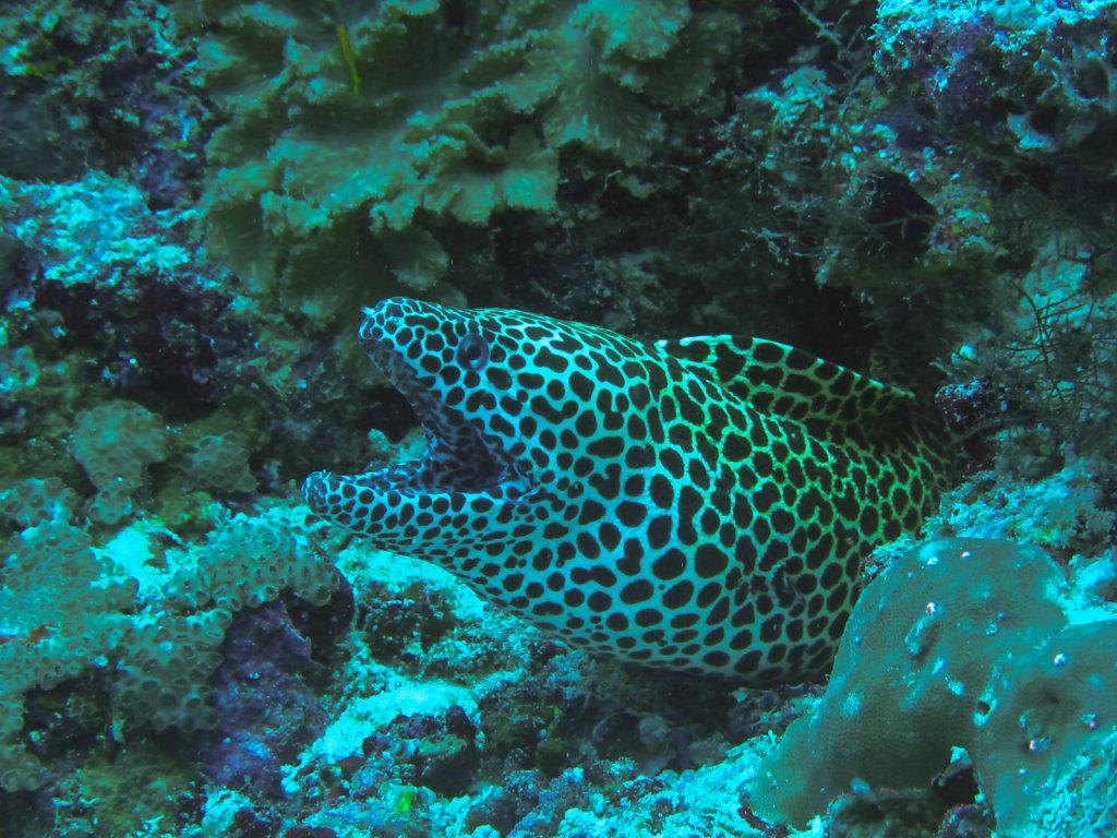028-Maldives.jpg