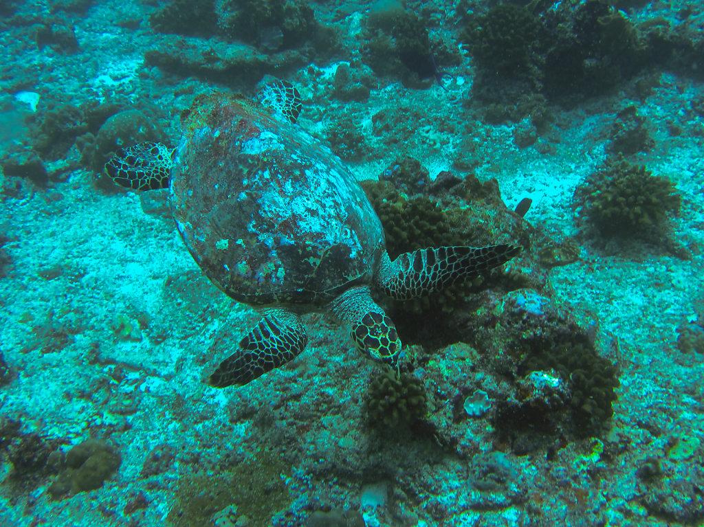 031-Maldives.jpg