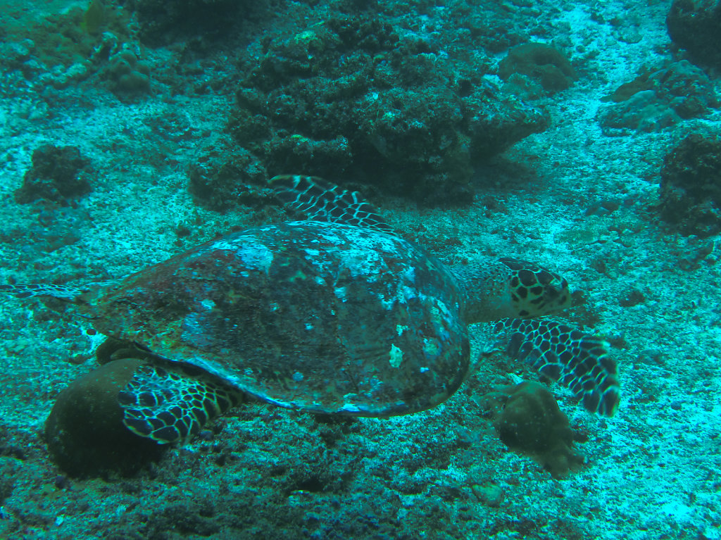 032-Maldives.jpg