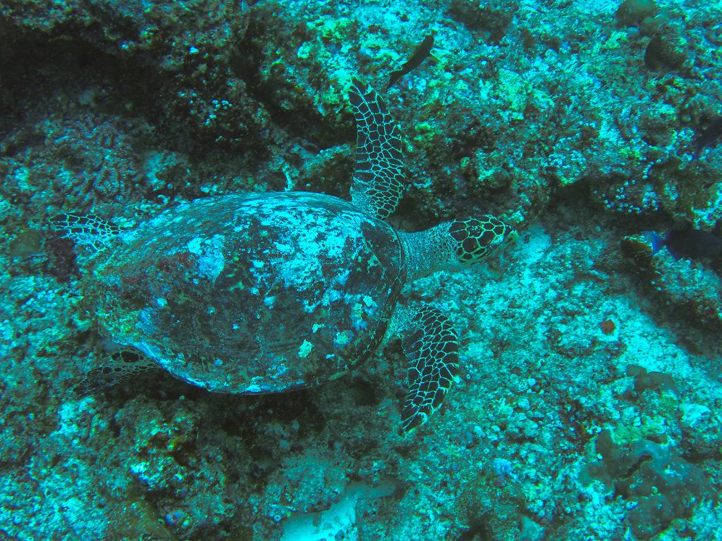 033-Maldives.jpg