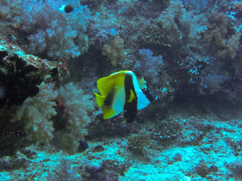 036-Maldives.jpg