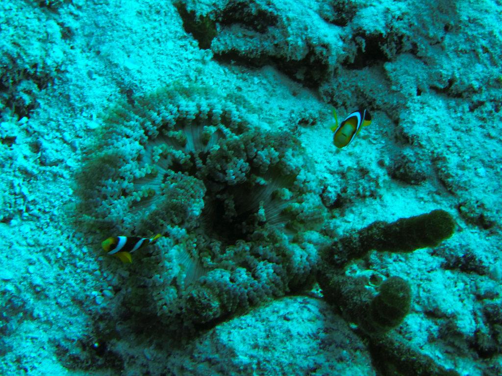 040-Maldives.jpg