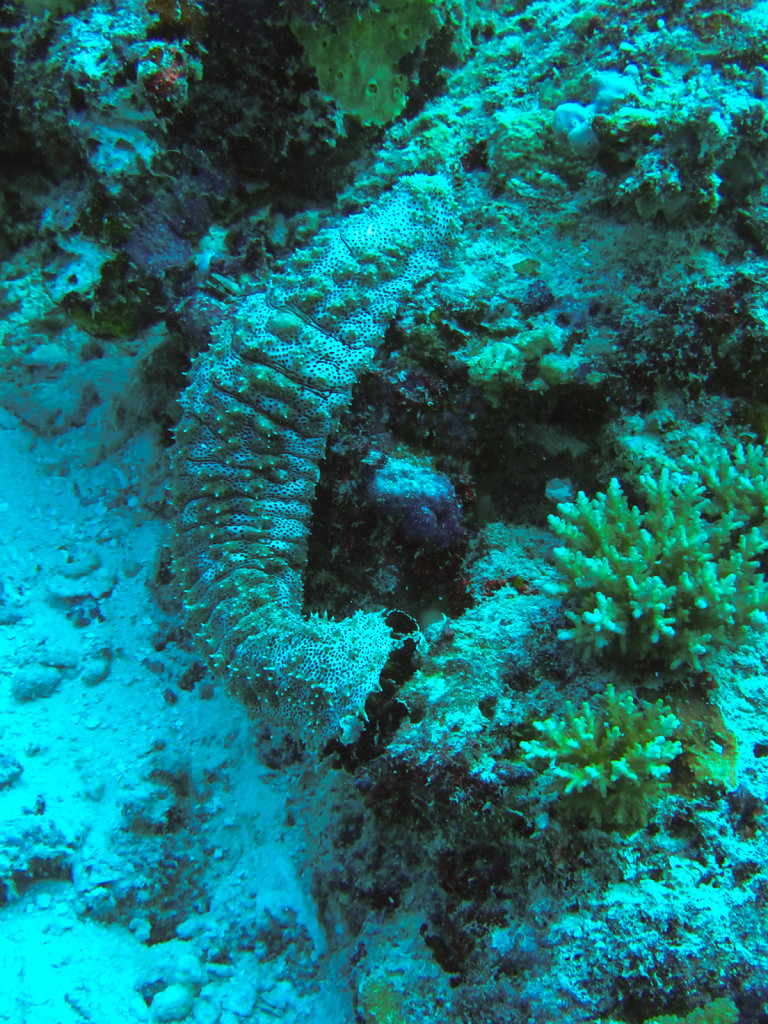 042-Maldives.jpg
